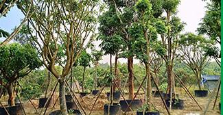 国家林业和草原局规范风电场项目建设使用林地的通知