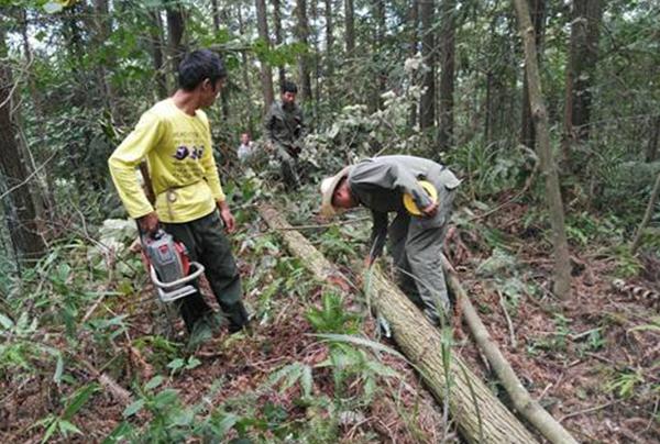 国网供电公司林木采伐调查设计方案