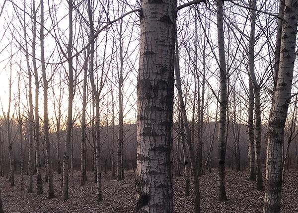 林木采伐设计