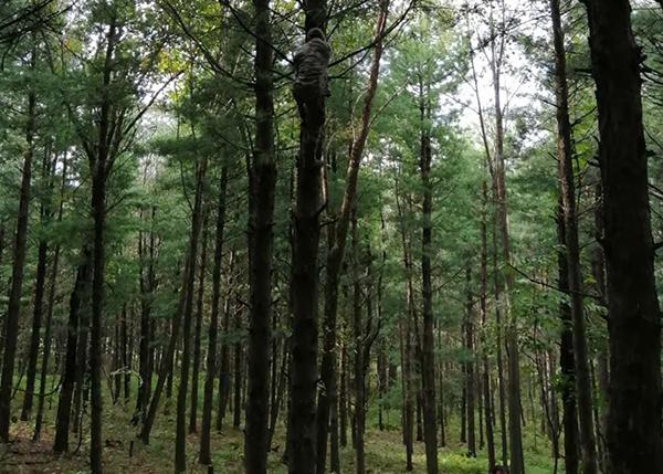 森林区划界定、生态功能、经济效益监测评价