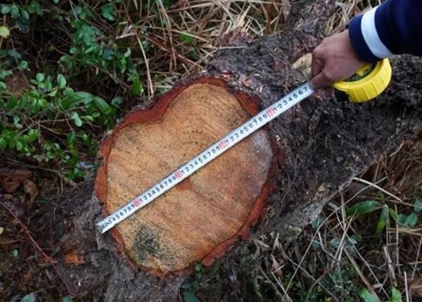 林业技术鉴定