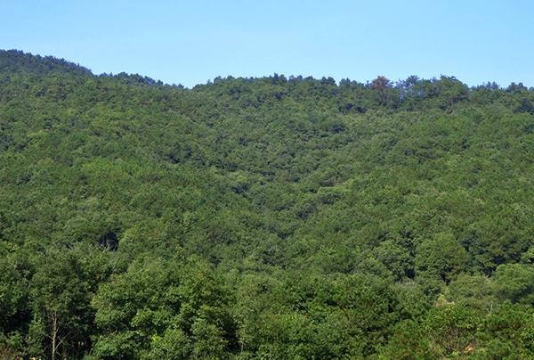 尾矿库森林植被绿化规划设计方案