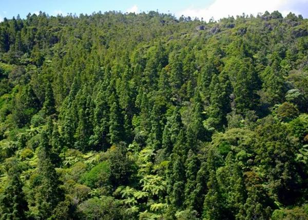 森林资源资产价值评估