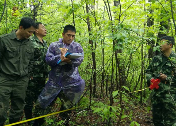 林业调查规划设计
