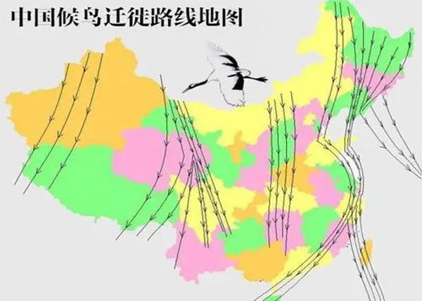 候鸟迁移路线评估报告