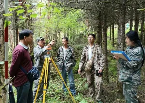 森林可燃物标准地调查